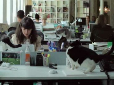 В Китае «открыли» рекламное агентство, в котором работают только одни коты