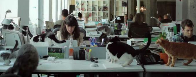 cat's agency
