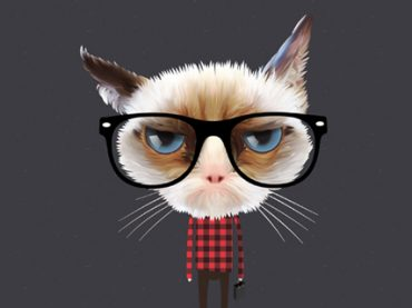 Котики и продуктивность: неожиданные научные способы взбодриться на работе (видео)