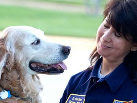 Собака-героиня, спасавшая людей после событий 11 сентября, отметила свое 16-летие