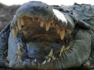 В индонезийских тюрьмах будут работать крокодилы