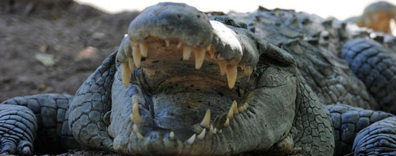 охранники-крокодилы