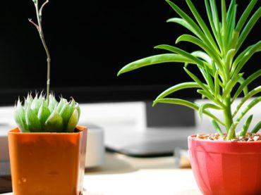 7 растений-аскетов, которые выживут в любом офисе