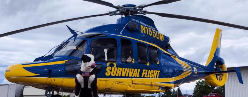 Служебный пес из Мичиганского аэропорта стал звездой интернета