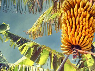 Помощник на банановую ферму, учитель балета в Индии и рабочий в цирк: 11 самых необычных вакансий месяца