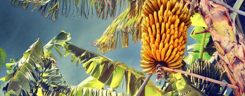 Работа на банановой фабрике, в цирке и: 11 самых необычных вакансий месяца