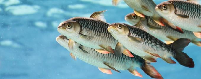 Рыбные места: топ-5 самых высокооплачиваемых вакансий месяца