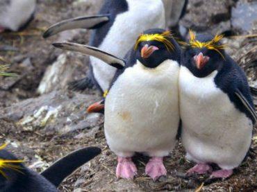Ученые просят волонтеров отсортировать фотографии пингвинов в Антарктиде