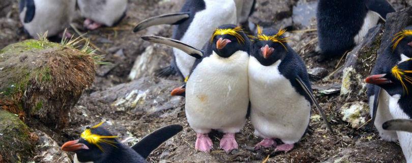 Ученые просят волонтеров отсортировать фотографии пингвинов
