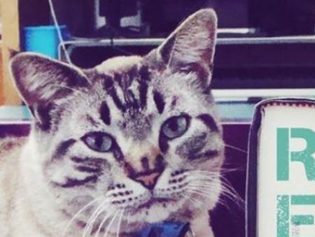 Техасский кот-библиотекарь по кличке Браузер лишился работы