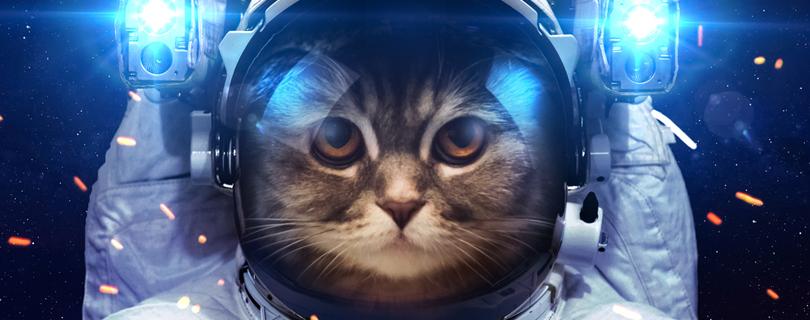 Космический старт: обзор самых «вкусных» стажировок лета