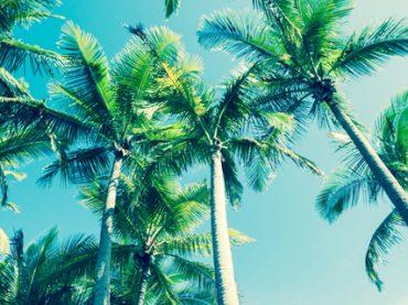Сфера туризма: какие зарплаты предлагают гидам, менеджерам и организаторам туров