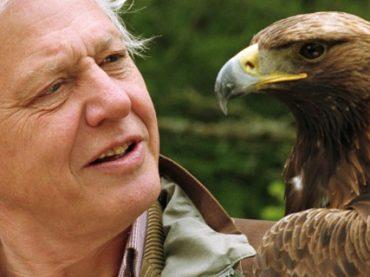 100 профессионалов: «книга джунглей» телеведущего-натуралиста Дэвида Аттенборо