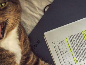 Кот ученого стал соавтором научной статьи по физике