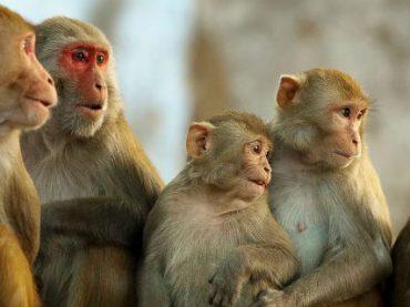 Известный телеведущий-натуралист Дэвид Аттенборо призвал прекратить жестокие опыты на приматах