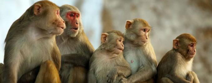 Натуралист Дэвид Аттенборо призвал прекратить жестокие опыты на приматах