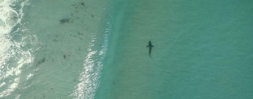 В Кейптауне дроны будут защищать туристов от акул