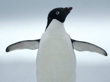 Курьеры DHL учатся ходить по льду у пингвинов