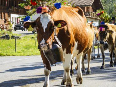 Швейцарский город отказал зоозащитнице в паспорте из-за «назойливости»