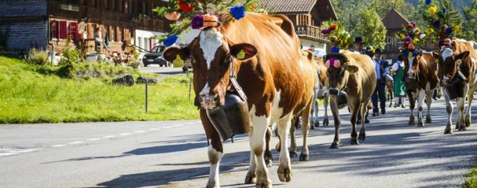 Швейцарский город отказал зоозащитнице в паспорте «из-за назойливости»
