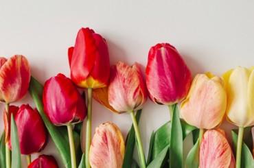 Опрос: как вы относитесь к празднику 8 марта?