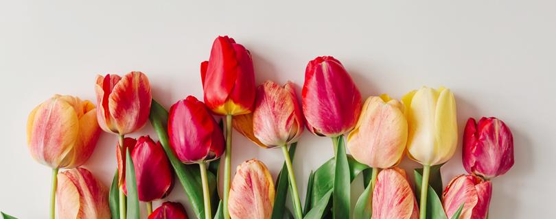 Опрос: как вы относитесь в празднику 8 марта?