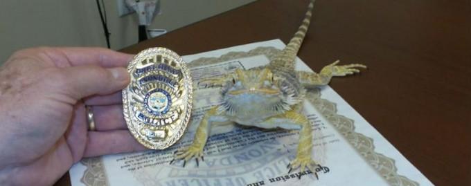 Полиция Аризоны наняла бородатого дракона для поиска наркотиков