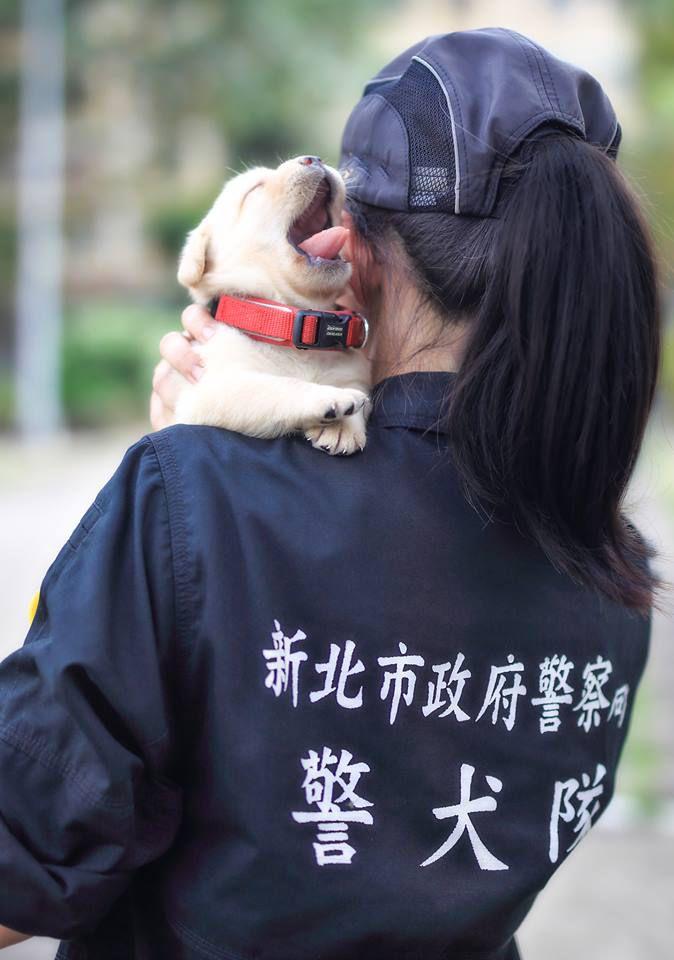 Полиция Тайваня похвасталась щенками (фото)