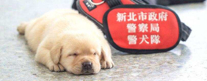 Полиция Тайваня похвасталась щенками