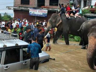 В Непале спасение туристов поручили специально обученным слонам