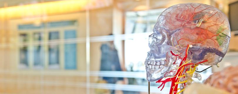 Лекція «BRAINY: Мозок зсередини – сучасні методи дослідження»