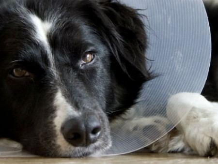 Жительница Италии добилась больничного по уходу за собакой