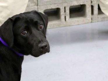 Из ЦРУ уволили собаку, которая не любила взрывчатку