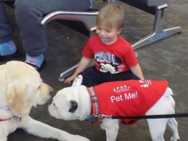 Пассажиров в аэропорту Лос-Анджелеса успокаивают собаки-терапевты