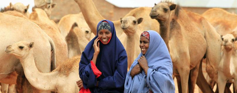 Краудфермерский проект предлагает купить козу в Сомали