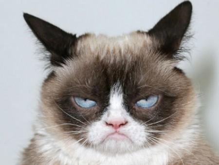 Владелица знаменитого Grumpy Cat отсудила $710 тысяч за авторское право