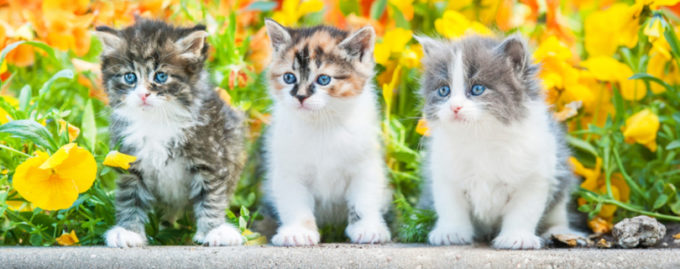 Финдиректор украл у фирмы полмиллиона долларов и купил котиков