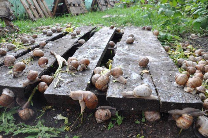 «Нагодуємо Європу ікрою равлика»: інтерв'ю з власником ферми «Эко Улитка» Дмитром Бутенком