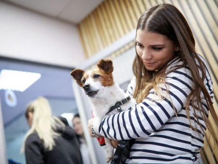 Ветеринарія та бізнес-середовище: компанія Nestlé запроваджує Purina Graduate Program