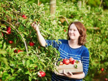 Щедрий врожай: добірка сезонних вакансій серпня